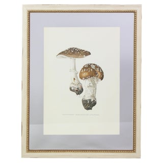 """Antique French Botanic Mycology Study Lithograph - Amanita """"Panther Cap"""" Mushroom For Sale"""