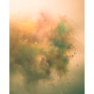 """""""Color Burst"""" Contemporary Photograph by John Manno For Sale"""