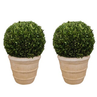 Early 21st Century Large Boxwood Potted Ball Topiaries - a Pair For Sale