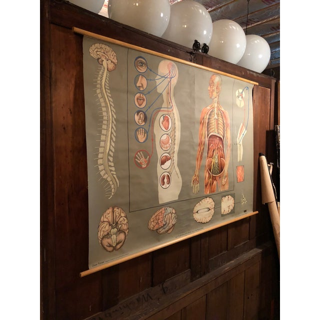 Modern 1960s Vintage Hagemann for Denoyer-Geppert German Human Nervous System Pull-Down Chart For Sale - Image 3 of 10