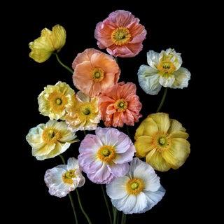"Photographic Botanical Print, ""Papaver Soiree"" by Artist Debi Shapiro"