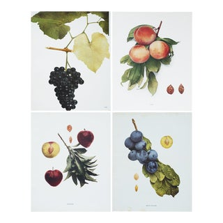 Fruits of New York Antique Photogravures by Hedrick - Set of 4
