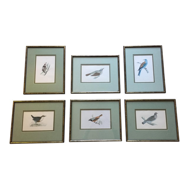18th C. English Bird Prints in Matching Frames - Image 1 of 12