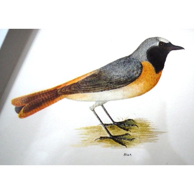 Vintage Framed Bird Prints - Set of 3 - Image 7 of 10