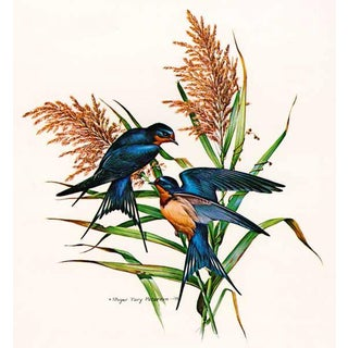 "1970s Roger Tory Peterson ""Barn Swallow"" Original Limited Edition Signed Print For Sale"