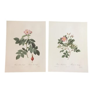 Pair of White and Pink Botanical Prints After Pierre-Joseph Redouté For Sale