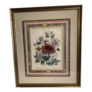 Mid 19th Century Lady Jane Loudon Hand Colored Botanical Print, Framed For Sale