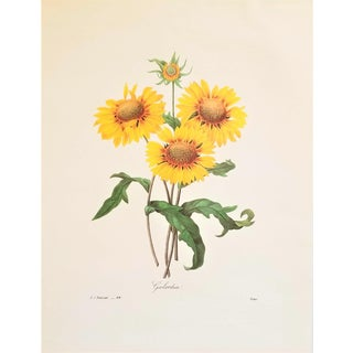 Pierre-Joseph Redouté Reproduction Yellow Sun Flowers Botanical Print For Sale