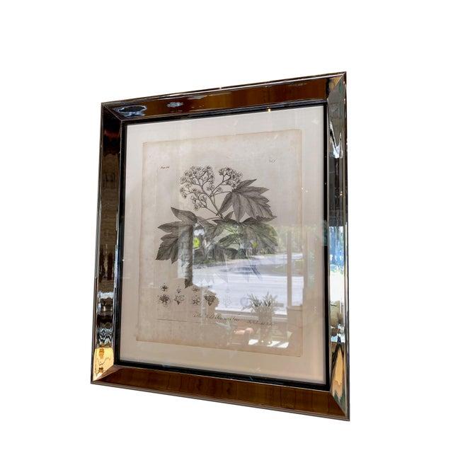 Antique Botanical Prints - Set of Six For Sale - Image 4 of 8