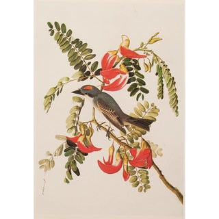 1966 Cottage Lithograph of Gray Kingbird by Aubudon For Sale