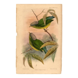 """Pipra Opalizans "", Limited Edition Bird Lithograph With Original Hand-Coloring by W. Hart 1898. For Sale"