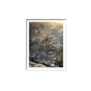 "Timothy Hogan ""Dawn"" Original Framed Color Landscape Photograph, 2017 For Sale"