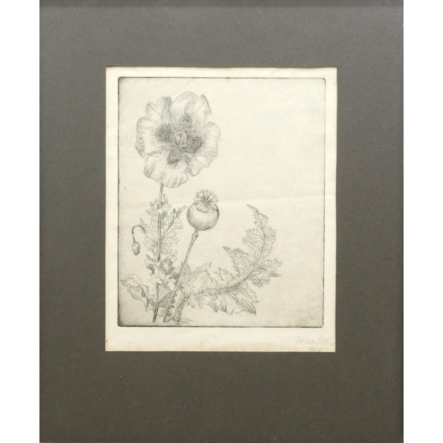 Framed etching on paper, Poppies, signed lower right Lorna Bath (Lorna Owens Francis, Texas, 1931-2013), dated 1964....
