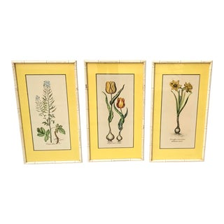 Framed Antique Original 1800's Hand Colored Botanical Illustrations - Set of 3 For Sale