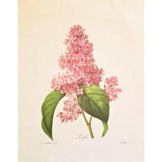 Pierre-Joseph Redouté Reproduction Lilacs Botanical Print For Sale