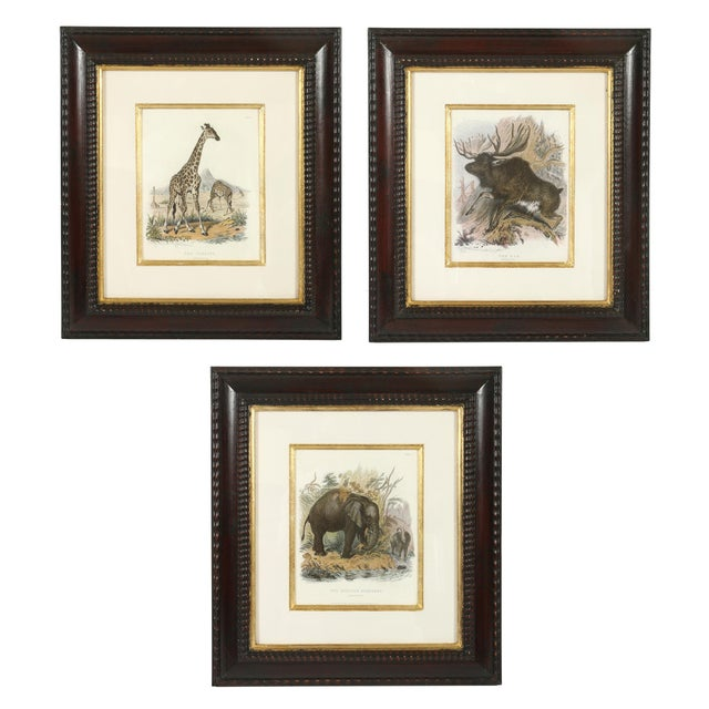 Mid 20th Century Set of Three Animal Prints in Mahogany Frames For Sale - Image 5 of 5