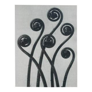 Karl Blossfeldt 2-Sided Photogravure N47-48