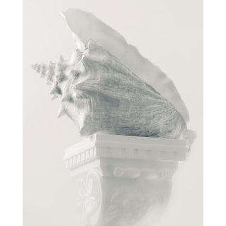 """""""Conch on Pedestal"""" Contemporary Photograph by John Manno For Sale"""