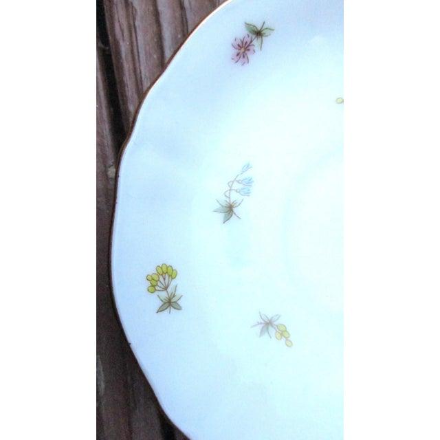 Richard Ginori Italian Porcelain Tea Cups - 24 Piece For Sale In Atlanta - Image 6 of 11