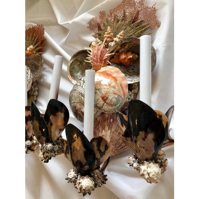 2010s Seashell Sconces - a Pair For Sale - Image 5 of 7
