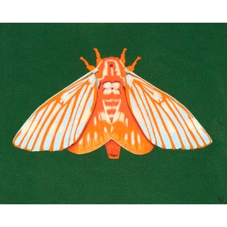 Orange Moth by Kelsey Livingston For Sale