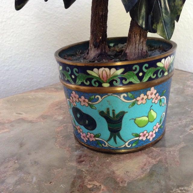 Vintage Flowering Jade Tree in Cloisonné Planter For Sale - Image 4 of 6