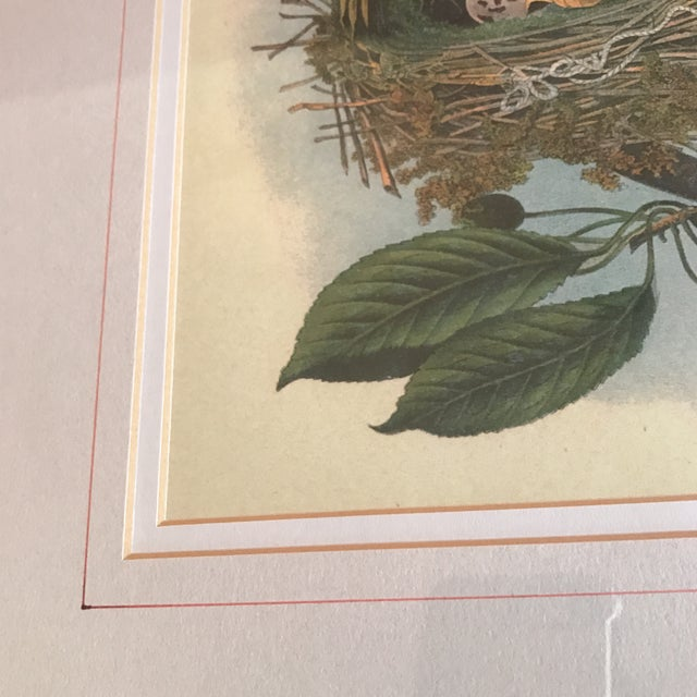 Vintage Bird Nest & Eggs Framed Print - Image 4 of 5