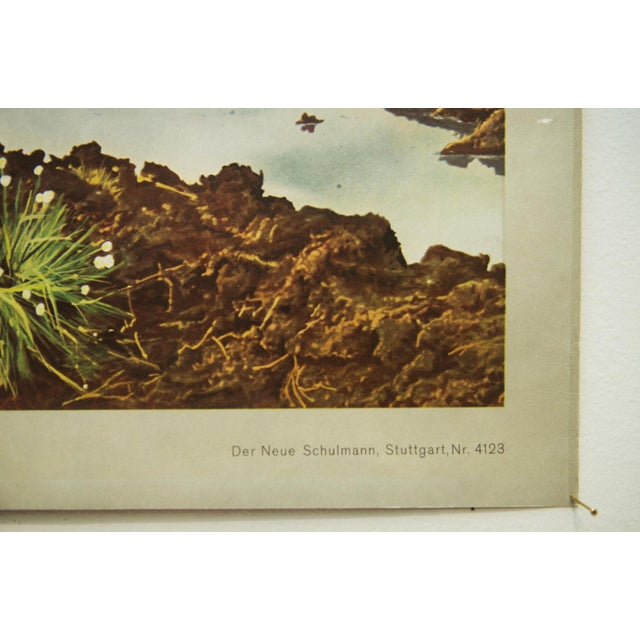 Mid-Century Modern German vintage peat removal school poster For Sale - Image 3 of 7