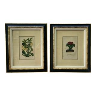 Framed Original Botanical Prints by Trowbridge Gallery - a Pair For Sale