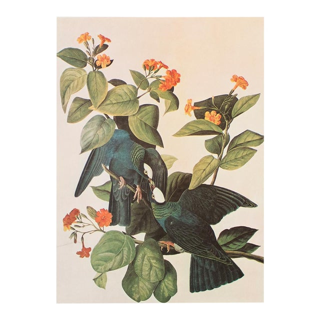 White-Crowned Pigeon by John J. Audubon, Vintage Cottage Print For Sale