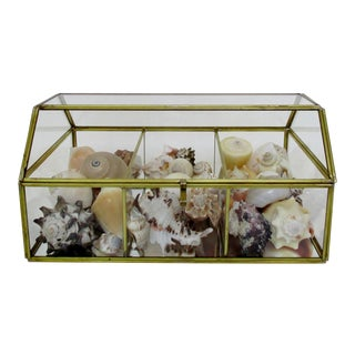 Display Box with Seashells For Sale