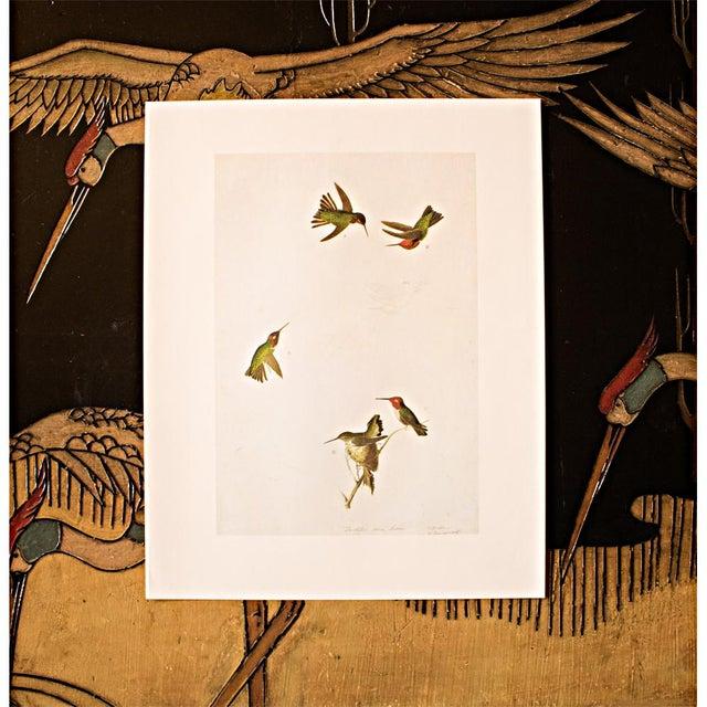 1960s Anna's Hummingbird by John James Audubon, 1966 Vintage Print For Sale - Image 5 of 8