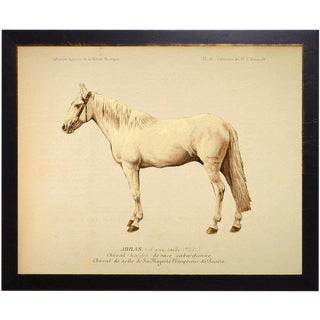 Wynona the Horse Bookplate 18x14