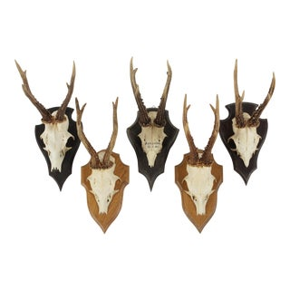 Vintage German Roe Deer Antlers - Set of 5
