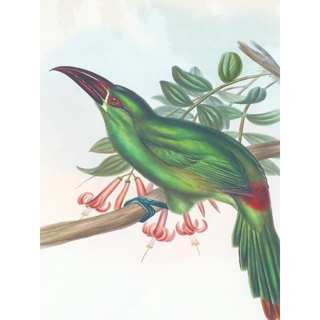 Illustration 19th Century Antique Hand-Colored Toucan Lithograph by John Gould For Sale - Image 3 of 9