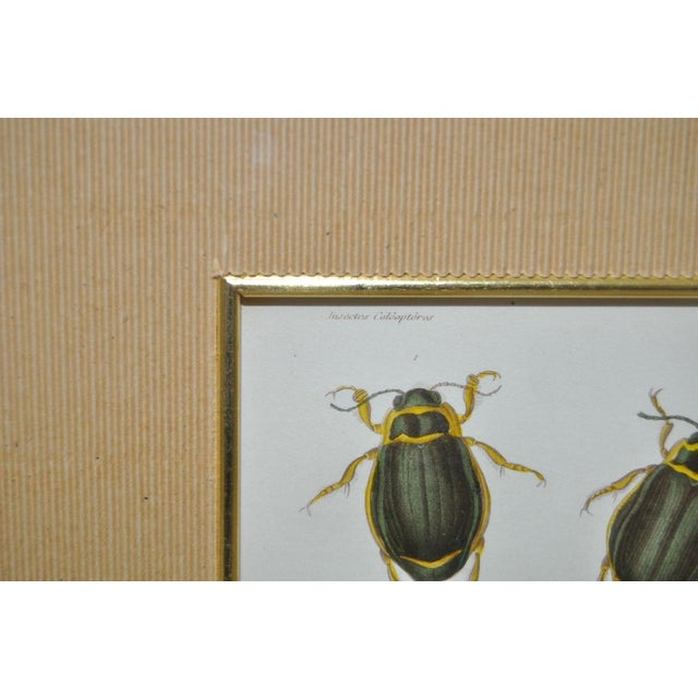 Pair of 19th Century Hand Colored Insect Plates - Framed For Sale - Image 4 of 8
