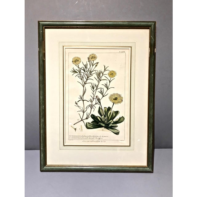 Mid 18th Century 18th C. Botanical Engravings - Set of 4 For Sale - Image 5 of 10