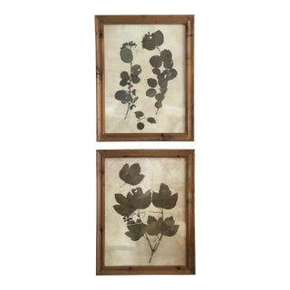 Botanical Prints in Reclaimed Wood Frames - A Pair For Sale