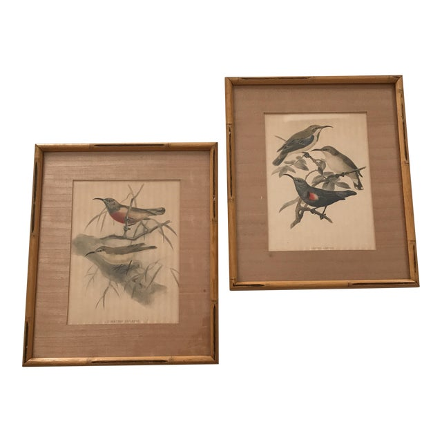 Early 20th C. Framed Avian Prints - A Pair For Sale