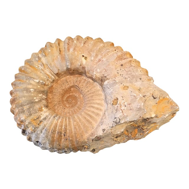 Rustic Natural Ammonite Fossil - Image 1 of 5