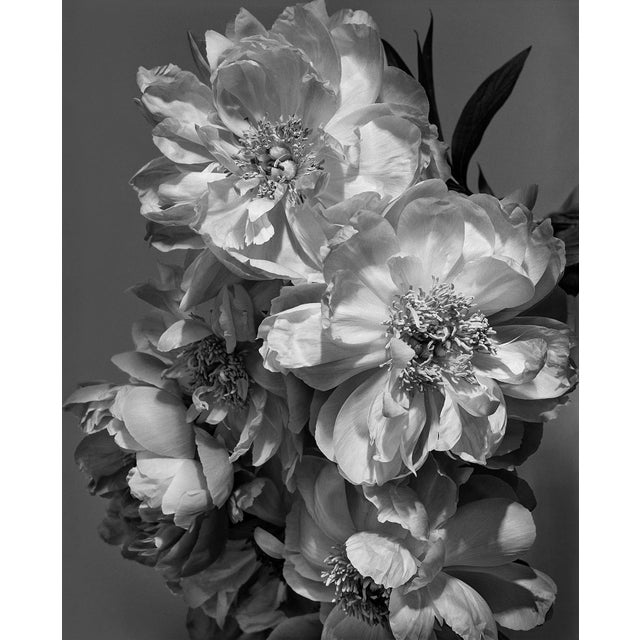 Coral Charm Peony I is from the series Gymnopédies by photographer Jean Karotkin. Each print is made to order digital...