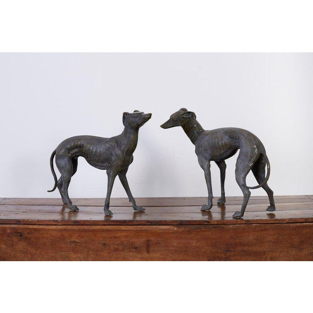 Pair of Bronze Whippets or Greyhound Dog Sculptures For Sale - Image 12 of 13