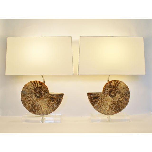 Ammonite Fossil Lamps - A Pair - Image 2 of 4