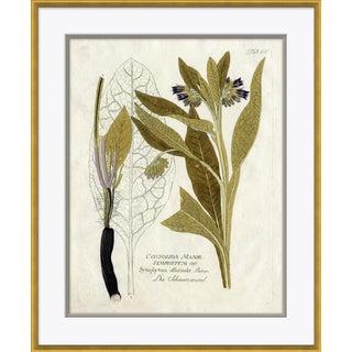 18th Century Botanical Engravings IX Art Print For Sale