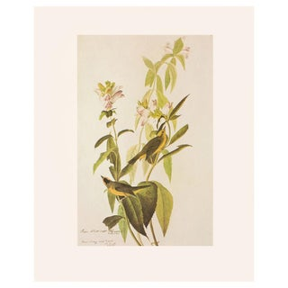 "1966 Audubon ""Green Black-Capped Flycatcher and Wilson's Warbler"" Vintage Cottage Print For Sale"