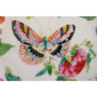 Antique Wucai Qing Porcelain Butterfly Plates C. 1820 - a Pair Preview