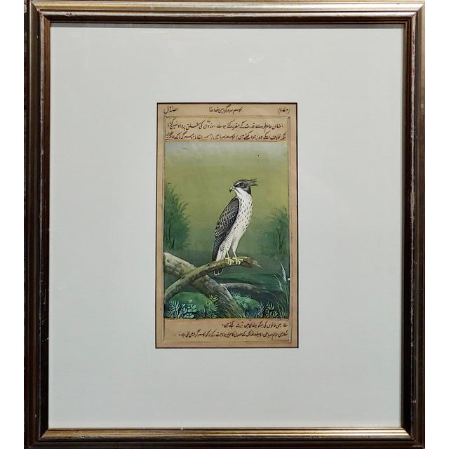 18th century Middle Eastern or Persian Falcon Painting w/Calligraphy watercolor painting on paper under glass and framed...
