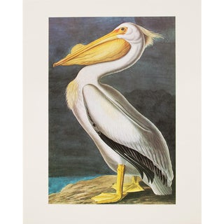 1960s Cottage Style Lithograph of a American White Pelican by John James Audubon