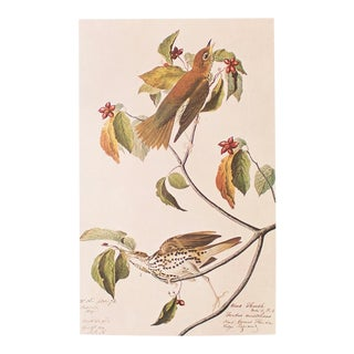 1966 Wood Thrush Vintage Print by John James Audubon For Sale