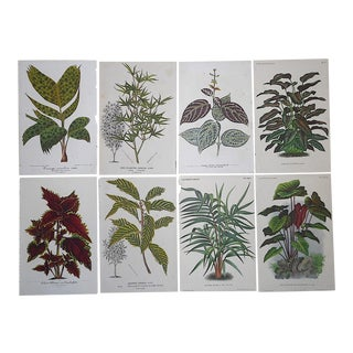 Antique 19th Century Botanical Lithographs-Ornamental Leaves-Set of 8 For Sale